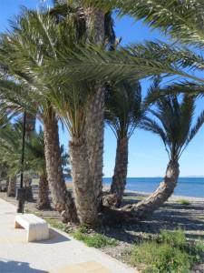 Richting Isla Plana