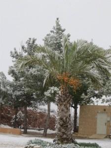Palmboom in de sneeuw